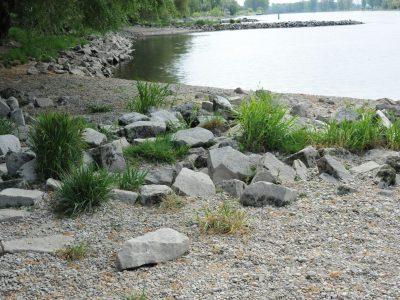 Flusslauf Niederalteich